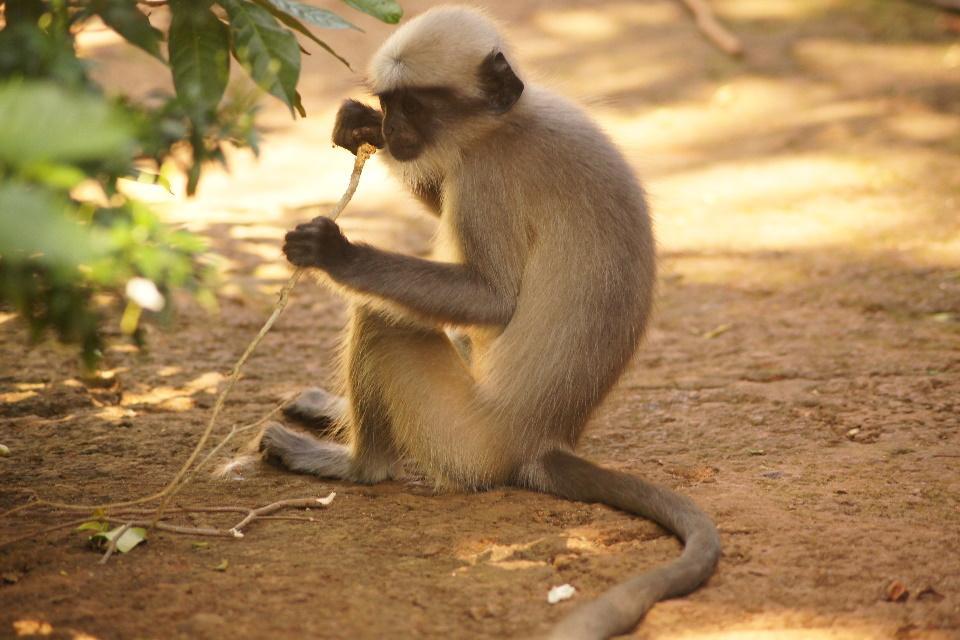 MonkeyStick