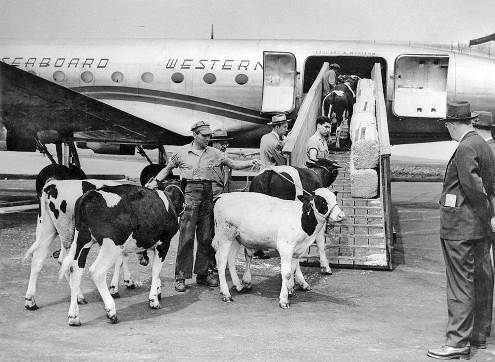 CattleLoading